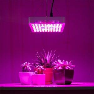 لامپ رشد گیاهان