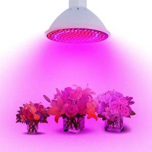 گیاهان آپارتمانی زیر نور لامپ رشد گیاه