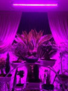 وال واشر رشد گیاه لنزی 36 وات