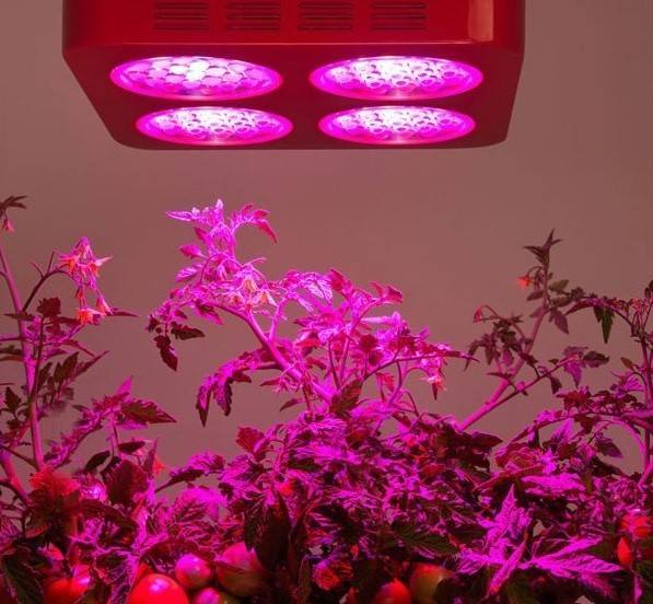 لامپ رشد گیاه ایران سان لایت