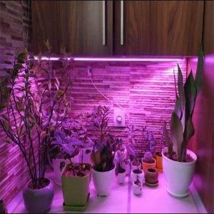 وال واشر رشد گیاه یک متری