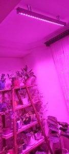 وال واشر رشد گیاه لنزی
