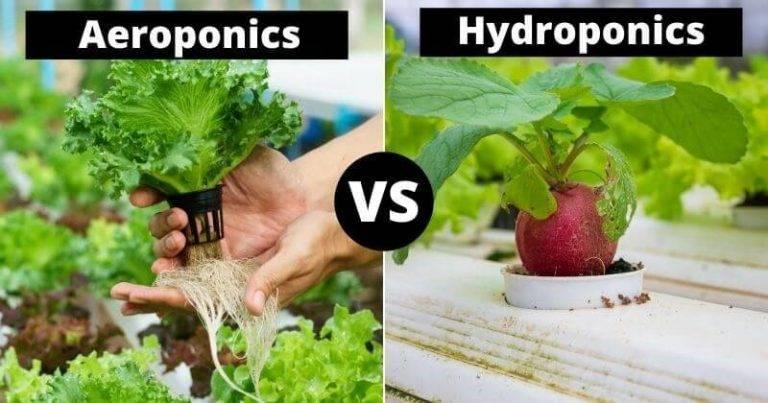 تفاوت کشت هیدروپونیک و ایروپونیک