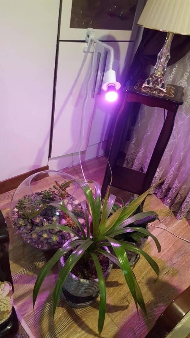 پایه کلیپسی با لامپ 5 وات