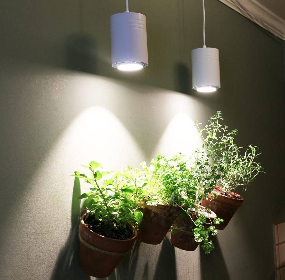 مطالعات علمی تأیید کننده تأثیر نور سفید در رشد گیاهان در مقایسه با استفاده تکی از نورهای آبی و قرمز است