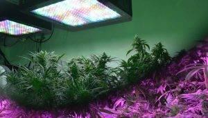 پروژکتور رشد گیاه فول اسپکتروم با قابلیت های متعدد