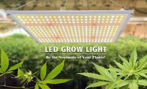لامپ رشد ال ای دی مورد نیاز گیاه ولی به میزان لازم